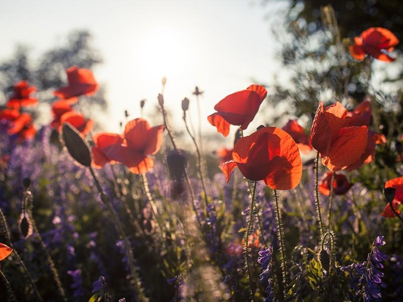 예배 시 은혜를 가로막는 것이 무엇입니까?