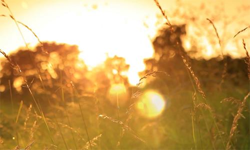 8월 첫째 주 광고 – 은혜로운 예배